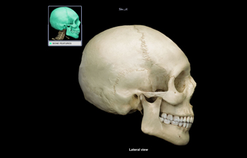 https://www.sxu.edu/news/articles/2020/2020-human-anatomy-skull.jpg